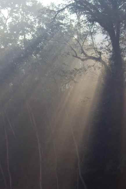Forest walk at Gokarna Forest Resort Kathmandu
