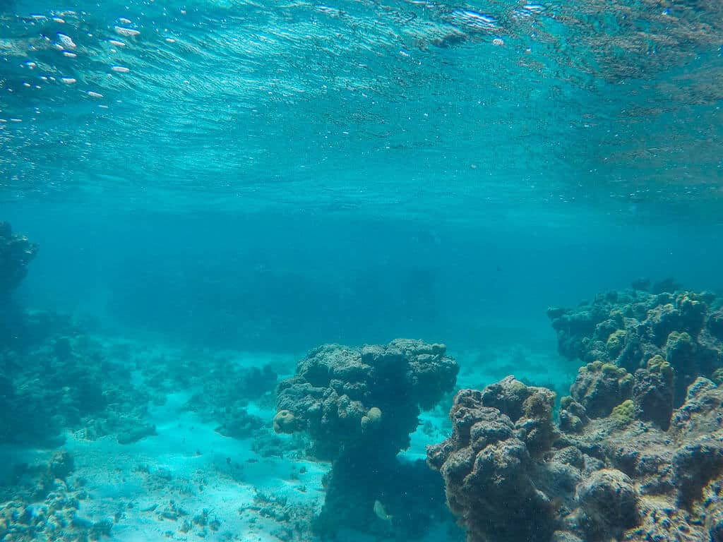Snorkelling in Antigua