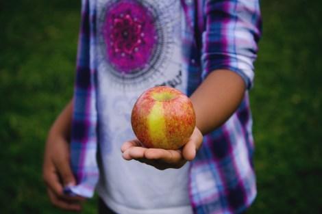 The Hobo Guide to Fruit Picking in Tasmania