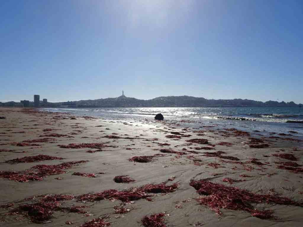 La Serena Coquimbo Beach Chile