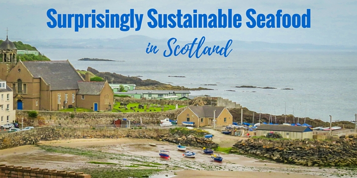 Surprisingly Sustainable Seafood in Scotland