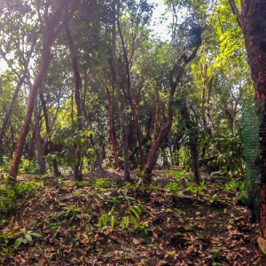 Wild agroforestry farm
