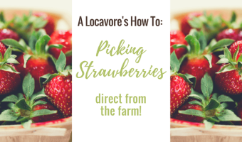 My Adventure Picking Strawberries In Canada