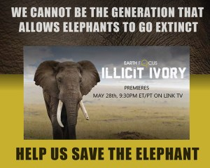 Earth Focus Illicit Ivory