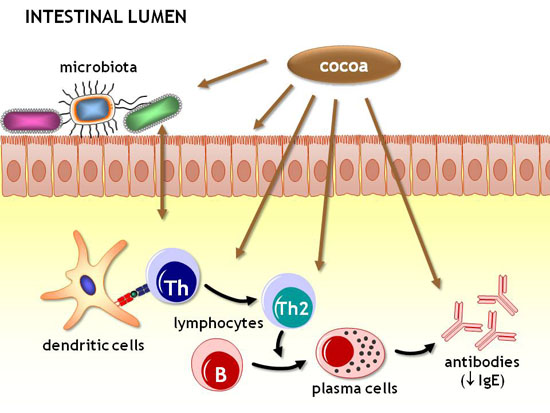 The effects of cocoa on the immune system