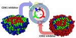 The formation of tight tumor clusters affects the efficacy of cell cycle inhibitors: a hybrid model study. - Global Medical Discovery