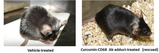 Coupling to a glioblastoma-directed antibody potentiates antitumor activity of curcumin. Global Medical Discovery