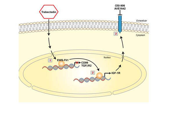 Trabectedin efficacy in Ewing sarcoma is greatly increased by combination with anti-IGF signaling agents.. Global Medical Discovery