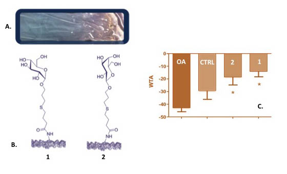 Thiol-ene Mediated Neoglycosylation of Collagen Patches- . Global Medical Discovery