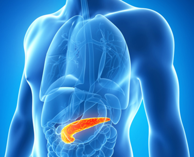 Pancreatic duct glands - global medical discovery