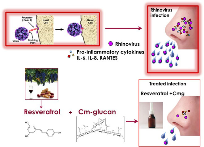 feat Resveratrol inhibits rhinovirus replication and expression of inflammatory mediators in nasal epithelia. Global Medical Discovery feature