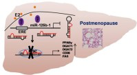 Upregulation miR-125b by estrogen protects against non-alcoholic fatty liver- global medical discovery