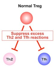Suppression of Th2 and Tfh immune reactions by Nr4a receptors in mature T reg cells. .Global Medical Discovery