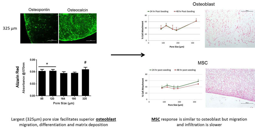 Effect of collagen-glycosaminoglycan scaffold pore size on matrix mineralization and cellular behavior indifferent cell types. Global Medical Discovery