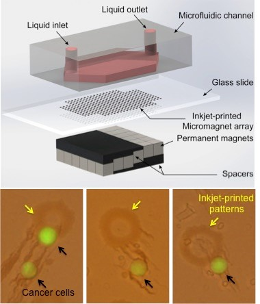 Inkjet-Print Micromagnet Array on Glass Slides for Immunomagnetic Enrichment Circulating Tumor Cells Global Medical Discovery