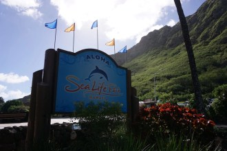 Top Things To Do in Oahu. Include Sea Life Park Hawaii. Check out more on GlobalMunchkins.com
