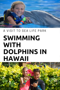 Did you know you could swim with dolphins in Hawaii? See why we loved visiting Sea Life Park in Oahu.