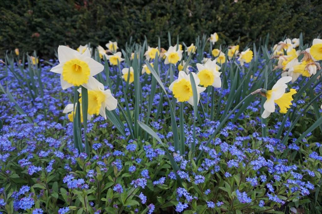 Spring_in_prague