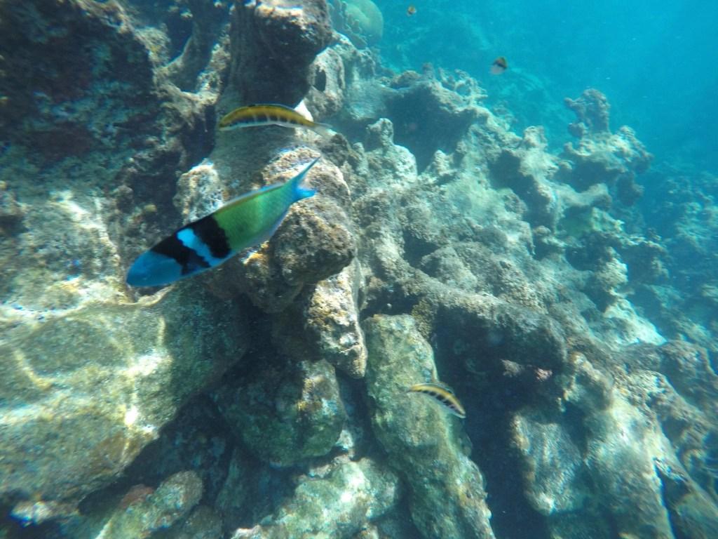 Fish on our snorkel trip at El Con Resort