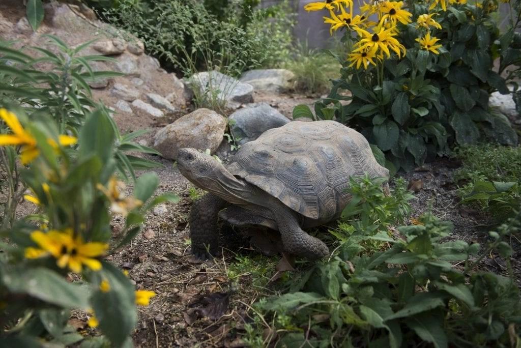 desert-tortois-habitat