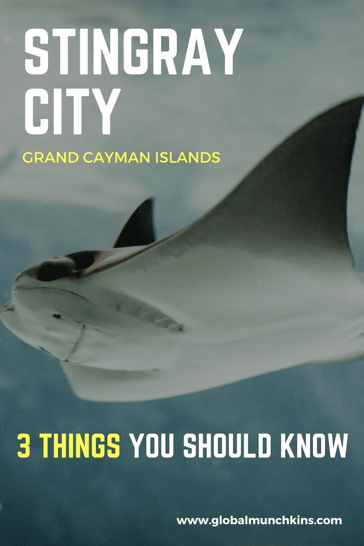 3 Things You Should Know about Stingray City Tours - Grand Cayman! One of the more extraordinary shore excursions you have to check out. #stingraycity #grandcayman