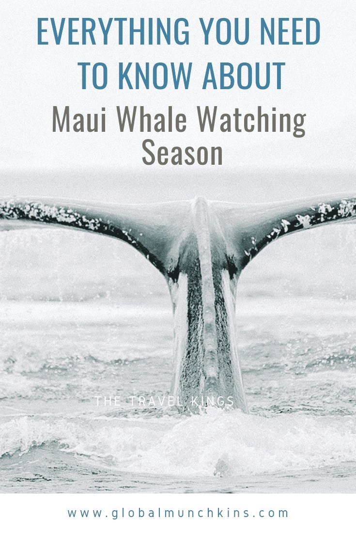 Amazing Whales in Maui! Your Guide to Maui Whale Watching Season! Maui Whale Watching is simply amazing. Our experiences of seeing whales in Maui have been nothing short of remarkable. Check out everything you need to know. #maui #whalesinmaui #mauiwhalewatching