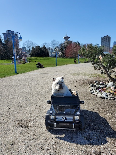 Mayo the bulldog taking in the sunshine as he coasts in CRAB Park