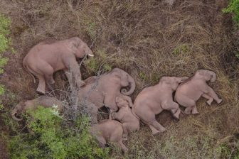 sleeping elephants e1623175602941