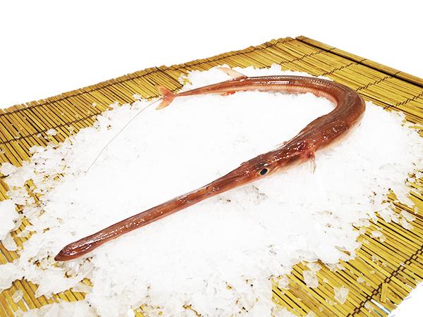 Aka Yagara – Red cornet fish Image