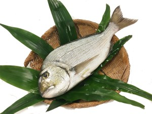 Hedai - Goldline sea bream Image