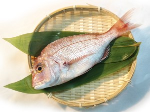 Kodai / Chidai - Crimson sea bream Image