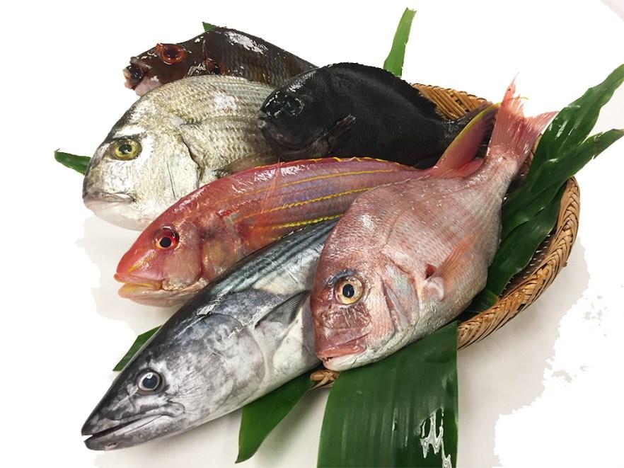 Omakase Fish Box - Ikejime Image