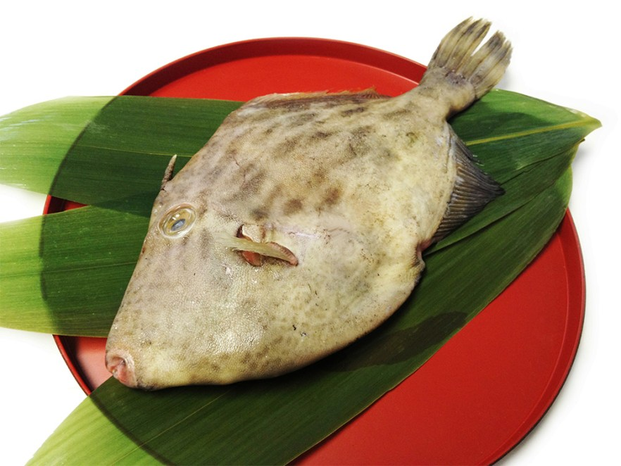 Kawahagi - File fish Image