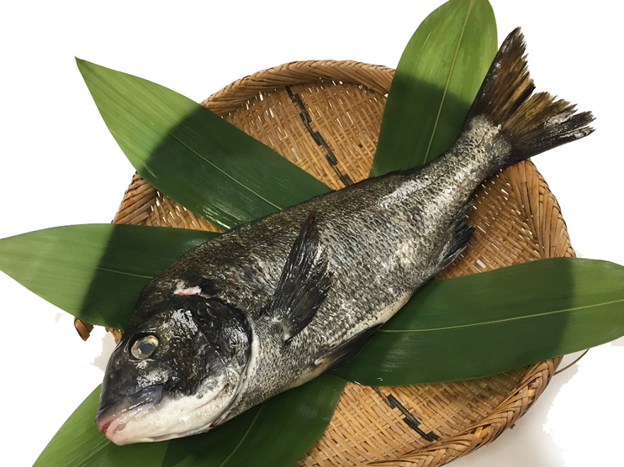 Kurodai - Black porgy Image