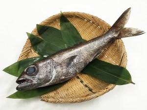 Kuro Mutsu - Gnomefish Image