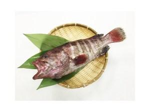 Mahata - Grouper Image