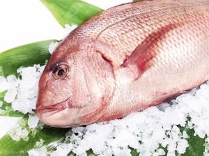 Madai (Farm-raised) - Red sea bream Image