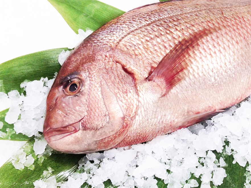 Madai (Farm-raised) - Red sea bream Image