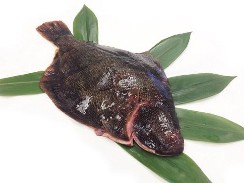 Matsukawagarei - Barfin Flounder