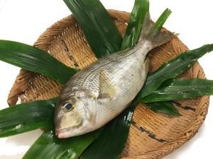 Meichidai - Gray Large-eye bream Image