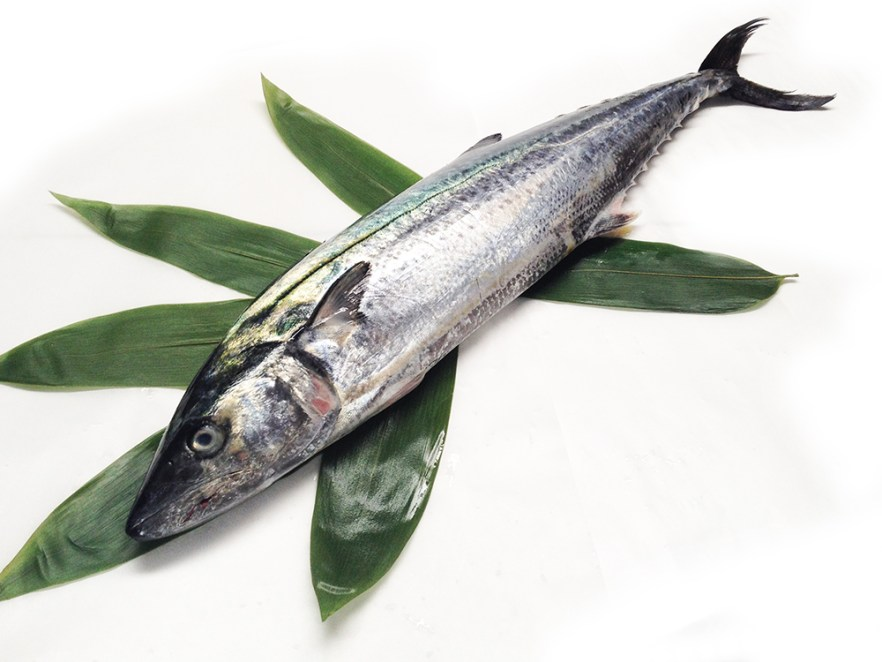 Sawara - Spanish mackerel Image