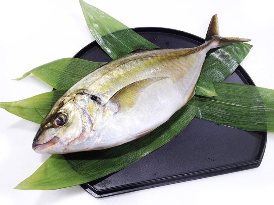 Shima-Aji - Striped jack mackerel Farm-raised Image