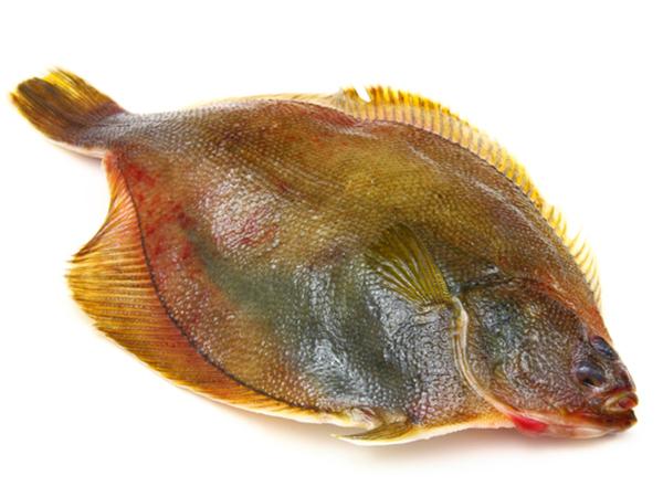 MIZUKAREI – Roundnose Flounder