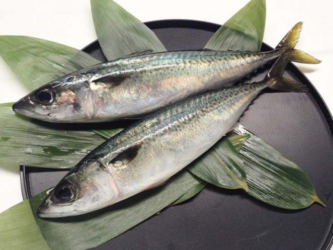 Saba - Mackerel