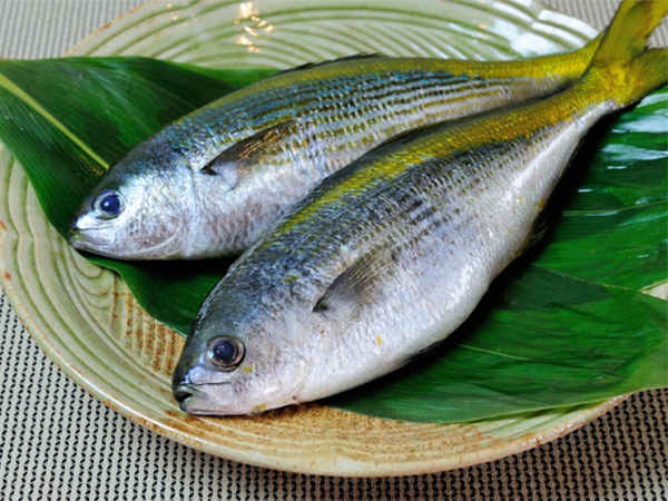 Umeiro / Yellowtail Blue Snapper