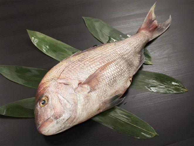 Madai - Japanese sea bream