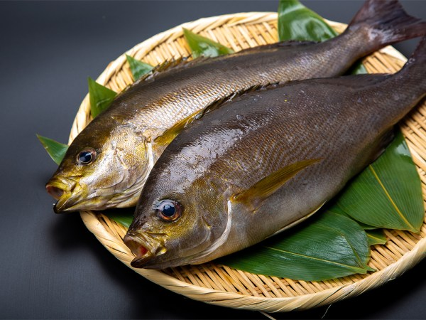 KAN ISAKI – Japanese Grunt Fish