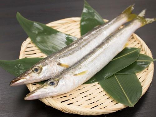 KAMASU - Japanese Barracuda