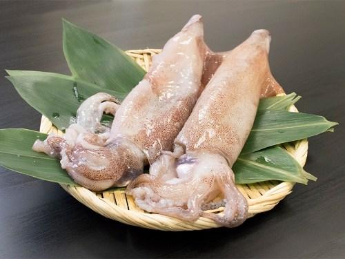 YARI-IKA - Spear squid
