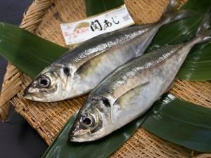 Aji Seki-aji - Horse Mackerel Image